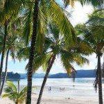 Catseye Beach through palm trees Hamilton Island