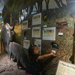 Plenty of interactive displays for the kids. Windows to wetlands.