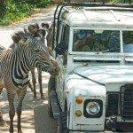 Go on Safari at Bali Safari and Marine Park