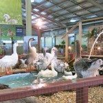 The geese are ready for the 3000 people that pass through the nursery each hour.