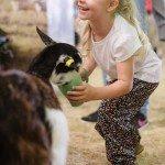 Feed a baby animals at the Farmyard Nursery, image RAS
