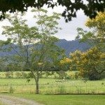Farmland near Dorrigo, Photo: Hamilton Lund; Destination NSW