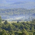 New England Tablelands, Dorrigo, Photo: Hamilton Lund; Destination NSW