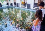The splendid Koi at Sofitel Sentosa Singapore Resort and Spa