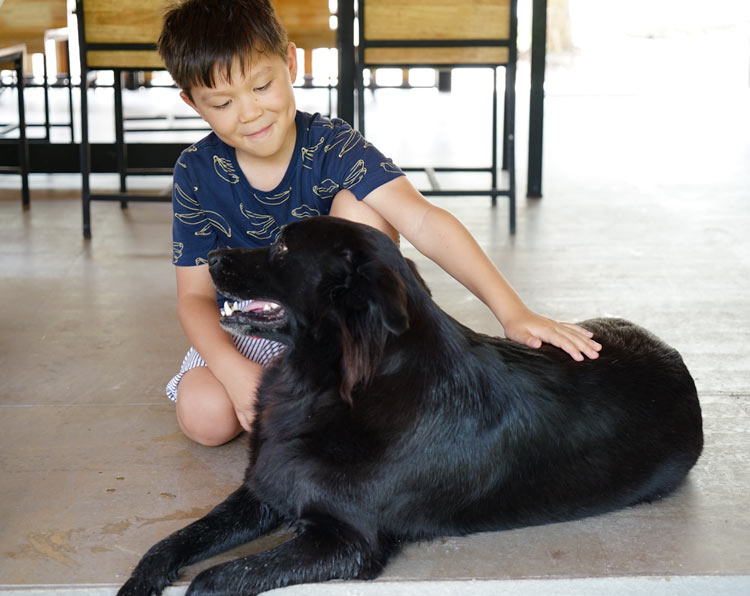 Be mindful that rabies is prevalent in Phuket dogs, although we couldn't keep our hands off Ollie the rescue dog.