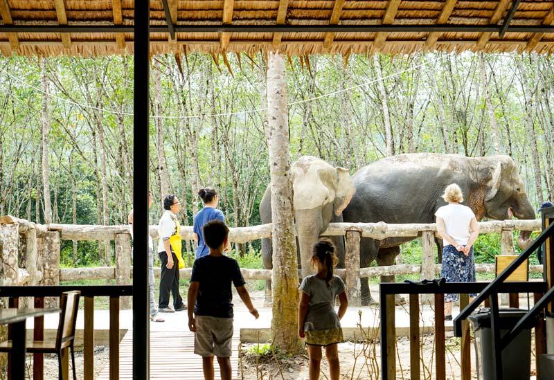 Phuket Elephant Sanctuary - two elephants